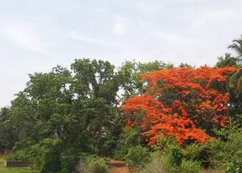 Индийское лето в Гоа
