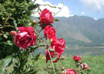 Из Гоа в Гималаи. В путь